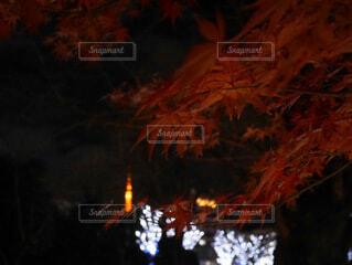 東京タワーと紅葉の写真・画像素材[3813815]