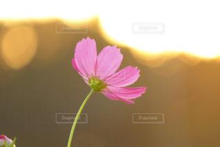 近くの花のアップの写真・画像素材[1374968]