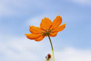 近くの花のアップの写真・画像素材[1389280]