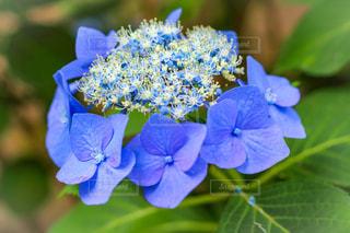 近くの花のアップの写真・画像素材[1389284]