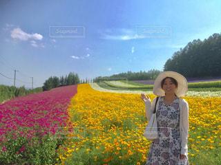 ファーム富田最高の見頃の写真・画像素材[892795]
