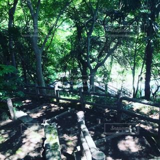 涼しい朝の森の写真・画像素材[1175588]