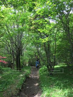 森林の写真・画像素材[462364]