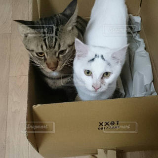 猫の写真・画像素材[379316]