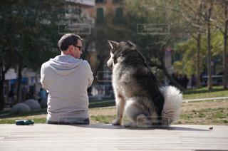 犬の写真・画像素材[382375]