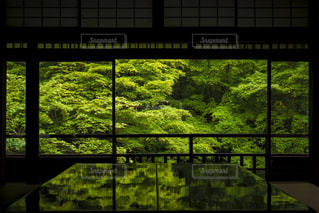 緑の写真・画像素材[476884]