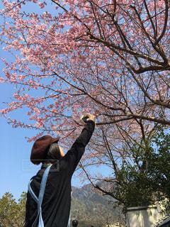 春の写真・画像素材[402965]