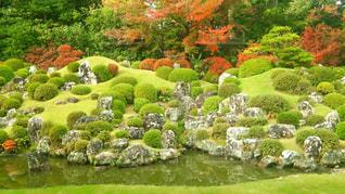 背景の水の庭の写真・画像素材[775518]