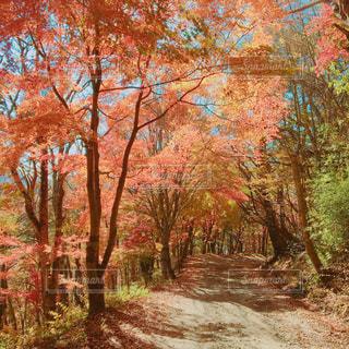 フォレスト内のツリーの写真・画像素材[852954]