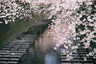 春の写真・画像素材[409726]