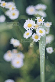近くの花のアップの写真・画像素材[1236405]