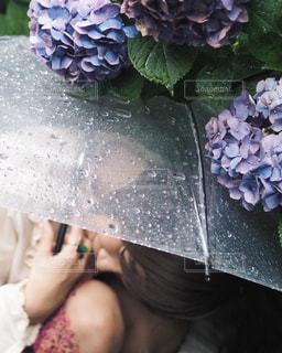 女性,雨,傘,屋外,水滴,紫陽花,人物,人