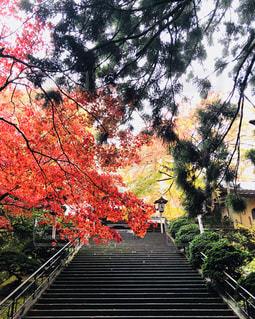 紅葉の季節の写真・画像素材[2577038]