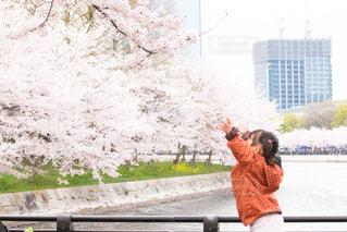 春の写真・画像素材[425398]