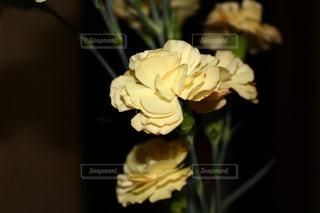 花の写真・画像素材[598824]