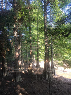 秋の森の写真・画像素材[795741]