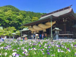菖蒲祭り - No.851412