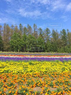お花畑 - No.880004
