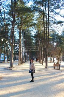 冬,旅行,韓国,休み,海外旅行,休日の過ごし方,冬ソナ,ナミ島