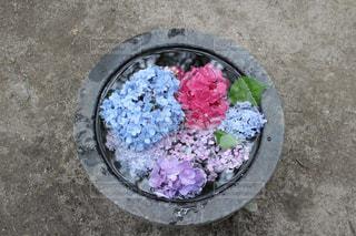 みすみずしい紫陽花 - No.1244282