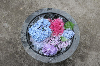 水,紫陽花,梅雨,福岡,筥崎宮,紫陽花まつり