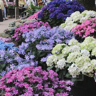 近くに紫の花のアップ - No.1244301