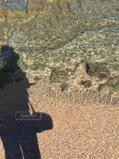 透き通った水の写真・画像素材[1460320]