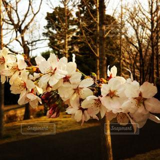 春,桜,卒業,旅立ち,別れ,出発,感謝,卒業式