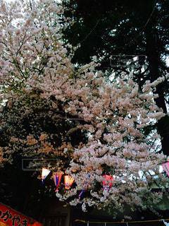 花 - No.405301
