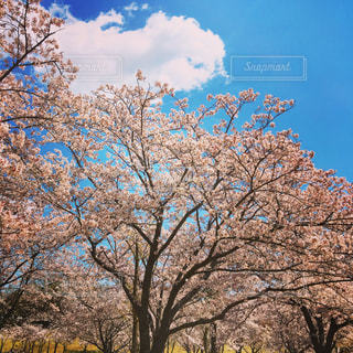 春 - No.429355