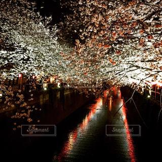東京の写真・画像素材[576375]