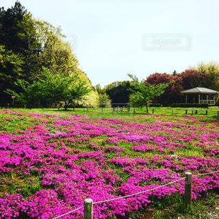 大きな紫色の花は緑豊かな緑のフィールドに立っています。の写真・画像素材[855804]
