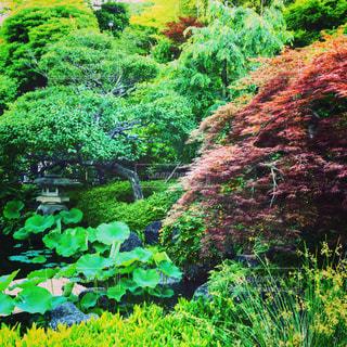 近くの緑豊かな緑の森 - No.1177006