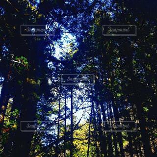 フォレスト内のツリーの写真・画像素材[1177605]