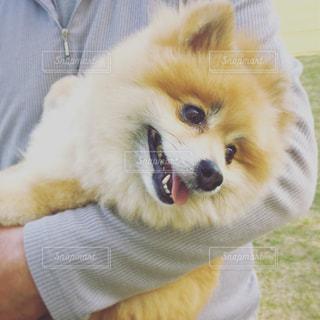 犬,公園,かわいい,散歩,笑顔,愛犬,笑ってるみたい