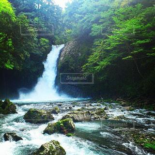 森を流れる川 - No.1215600