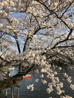 近くの木のアップの写真・画像素材[1122329]