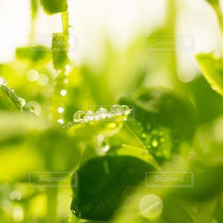 緑の写真・画像素材[458164]