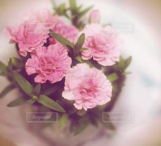 花の写真・画像素材[475488]