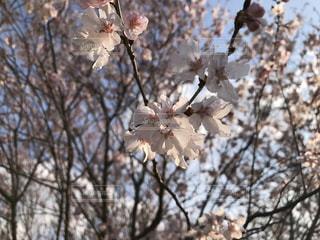 春 - No.409413