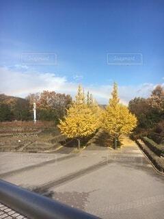 自然,空,秋,屋外,虹,樹木,イチョウ,奇跡,コラボ