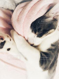 猫,冬,動物,子猫,毛布,cat,熟睡