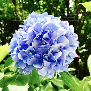近くの花のアップの写真・画像素材[1197420]