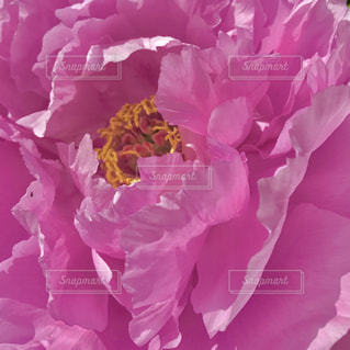 花,ピンク,和風,福岡,福岡城,桃色,pink