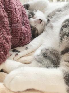 冬だけど暖かい窓辺の猫さま💕の写真・画像素材[2069619]