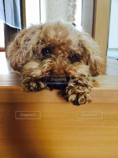 階段でご主人様を待つ犬の写真・画像素材[978487]