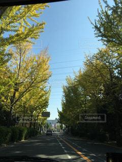 緑の写真・画像素材[453097]