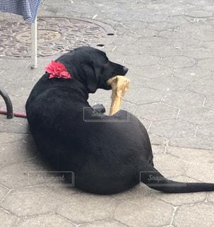 犬,公園,ニューヨーク,動物,赤,かわいい,黒,アメリカ,プレゼント,リボン,外国,マンハッタン,西洋,骨,シッポ