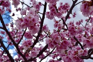 花の写真・画像素材[387316]