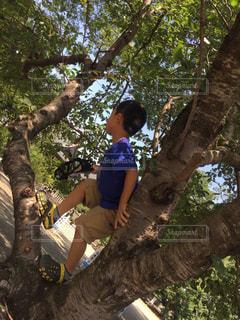 自然,夏,田舎,虫取り,木登り